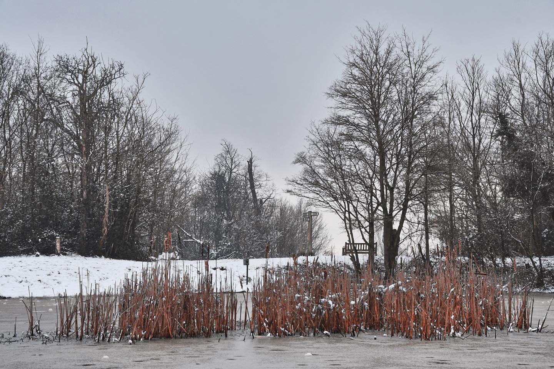 Barn Hill Pond, United Kingdom