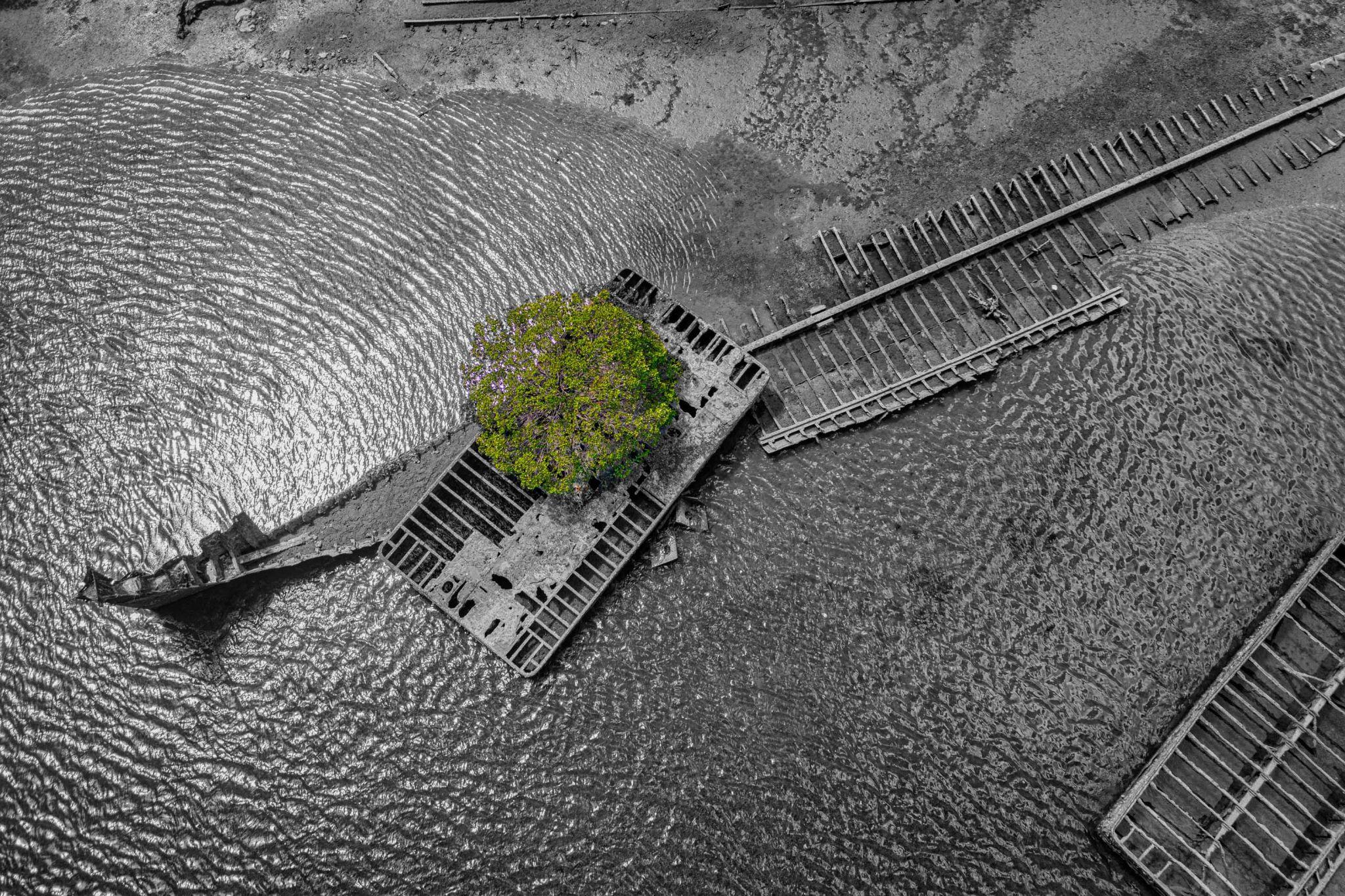 Garden Island Ships Graveyard Port Adelaide, South Australia, Australia