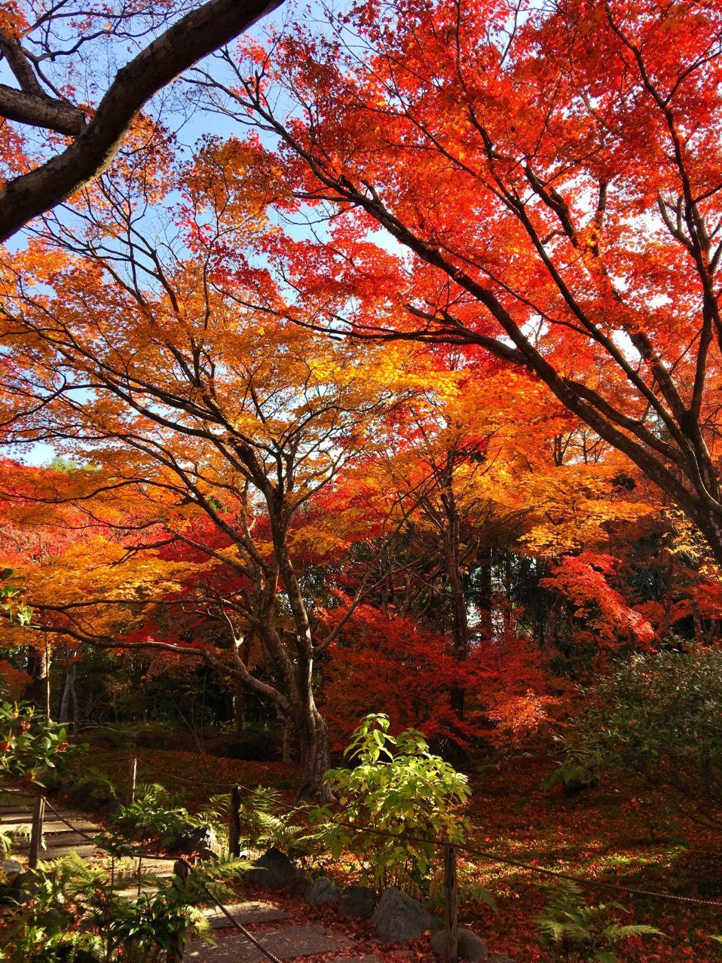 Hokyoin Temple, Japan