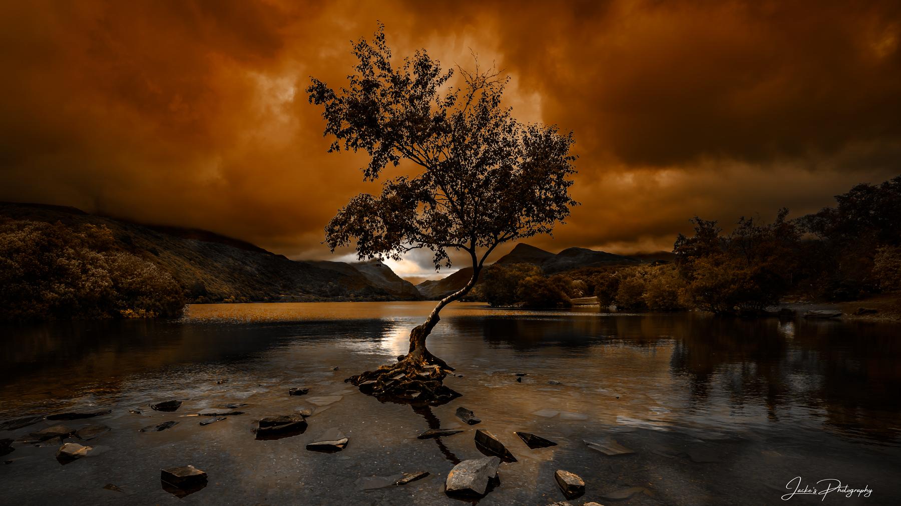Lonely Tree Llanberis, United Kingdom