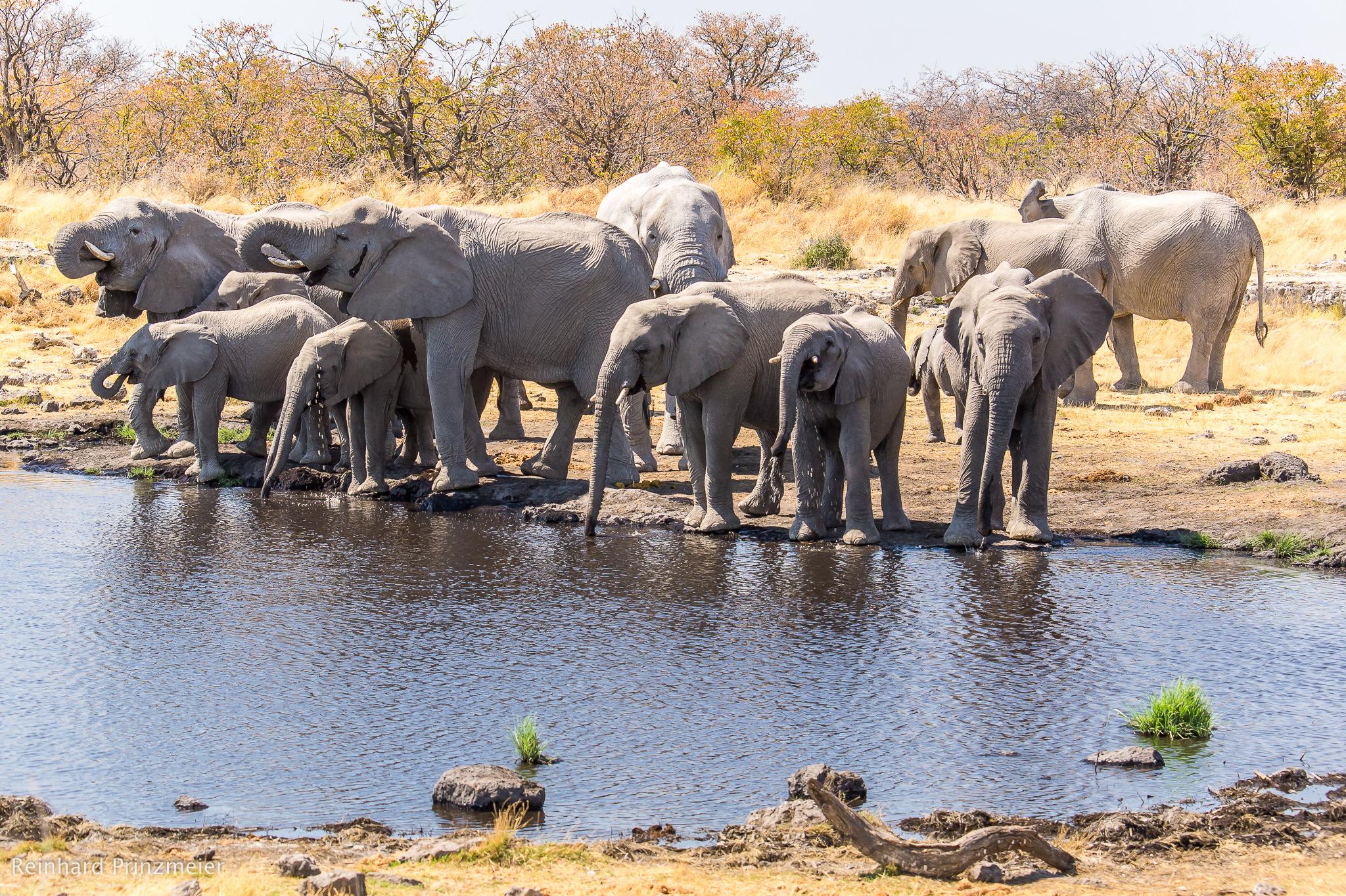 Nuamses waterhole, Namibia
