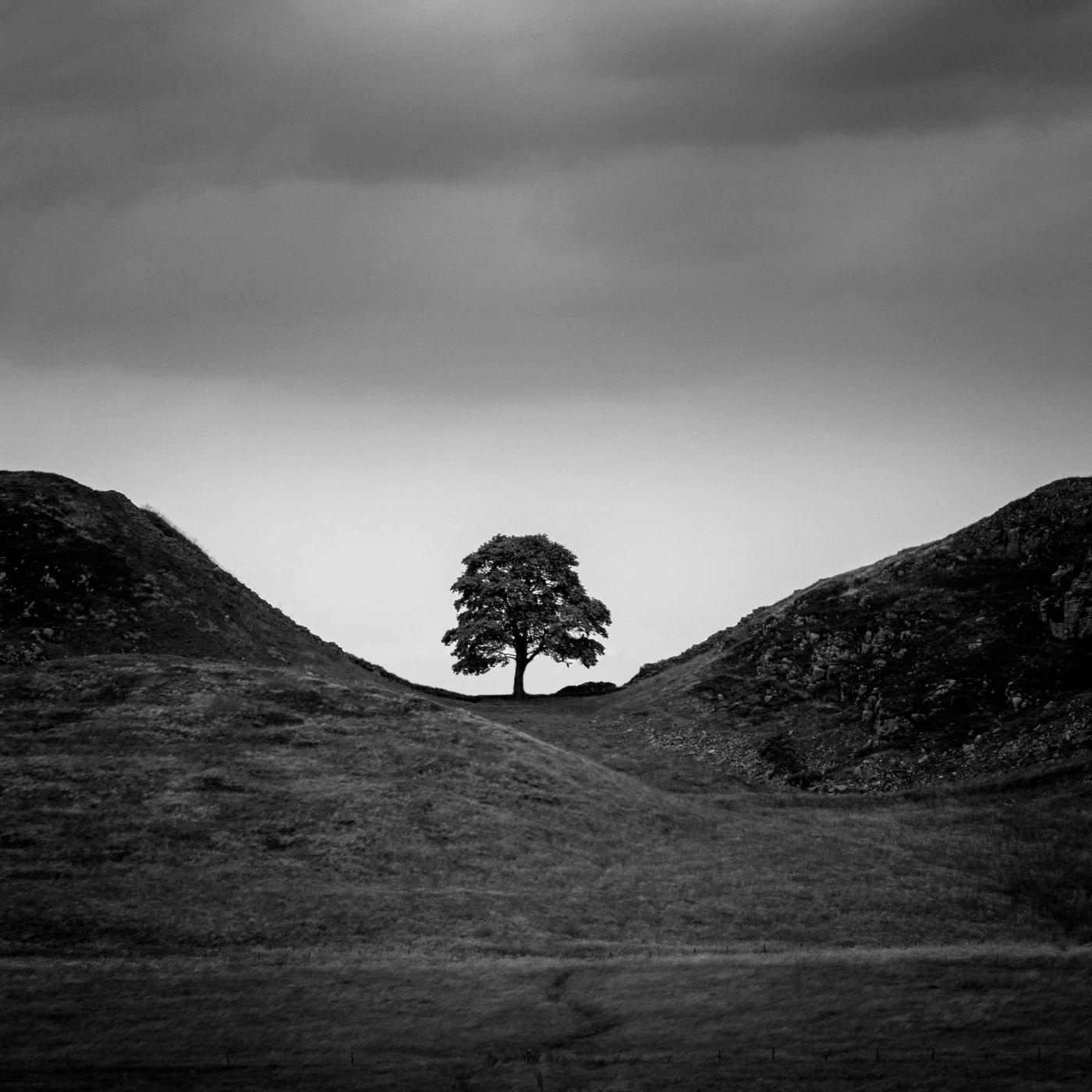 Sycamore gap tree, United Kingdom