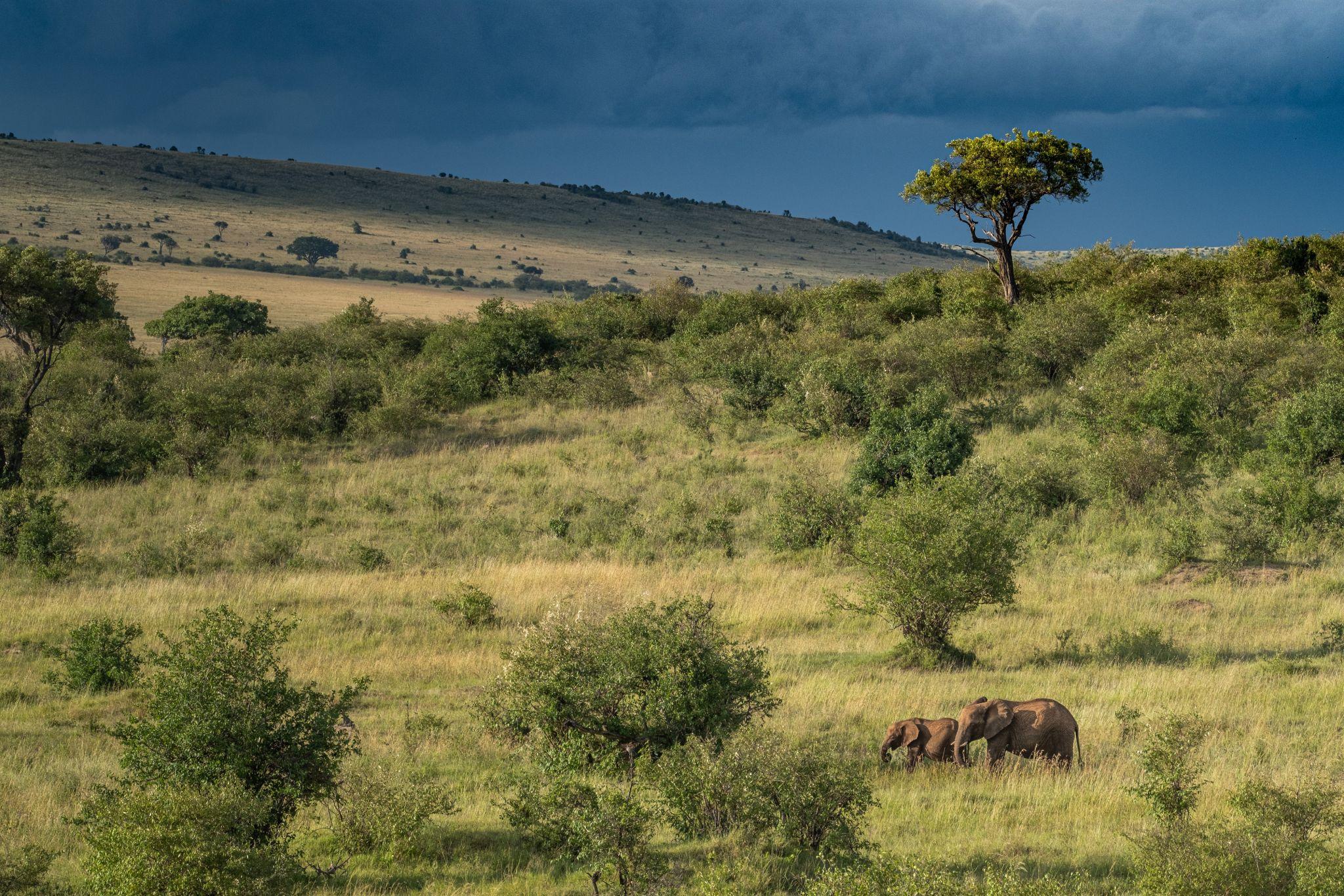 Green valleys after the rain, Maasai Mara National Reserve, Kenya