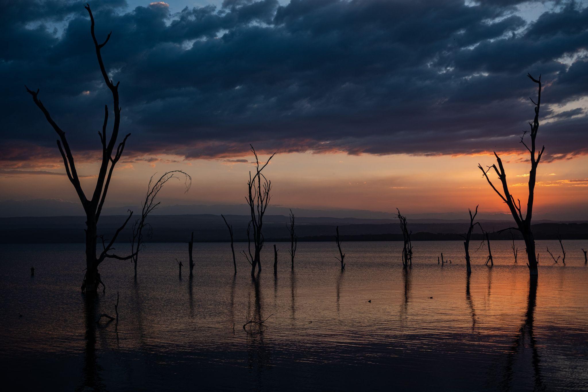 Dead trees, Lake Nakuru, Kenya