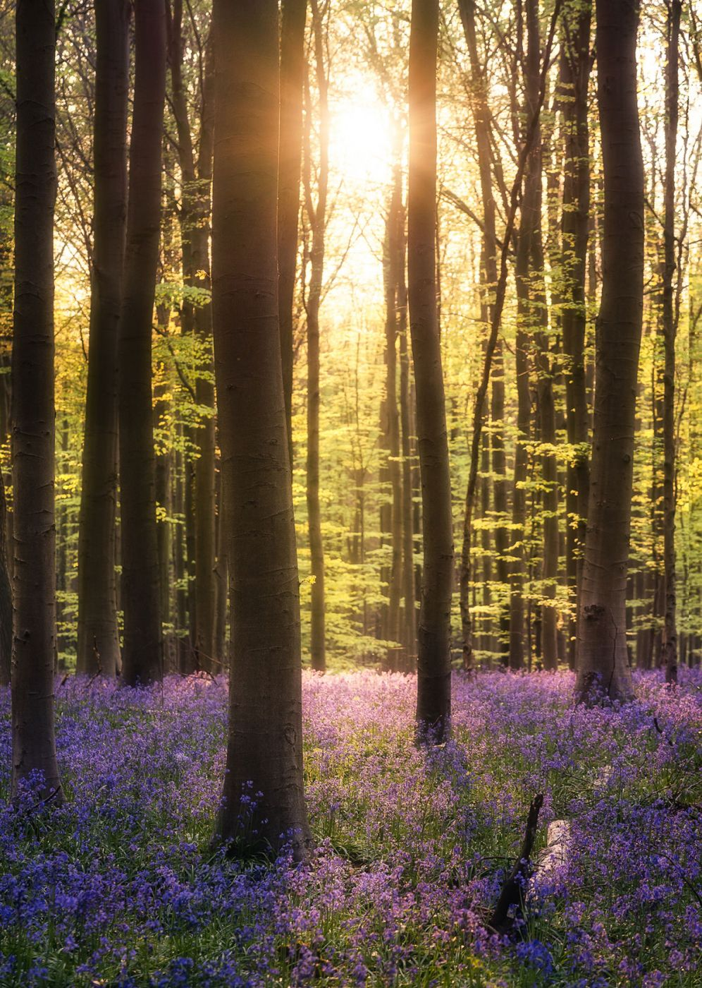 5 tips for photographing Hallerbos
