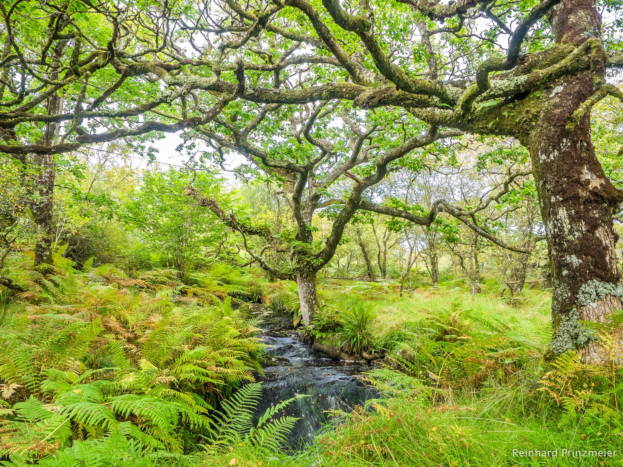 Claonaig Ancient Oak Wood, United Kingdom