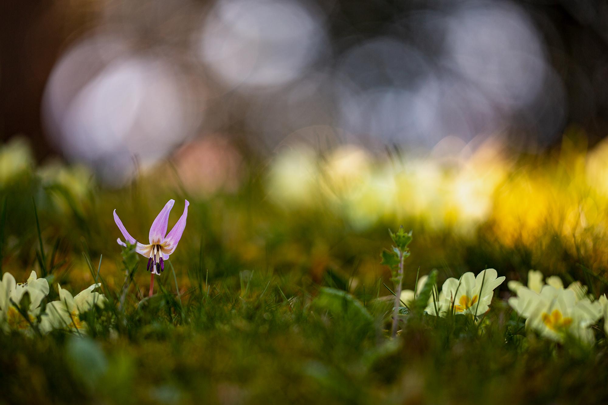 Frühling im Onsernonetal, Switzerland