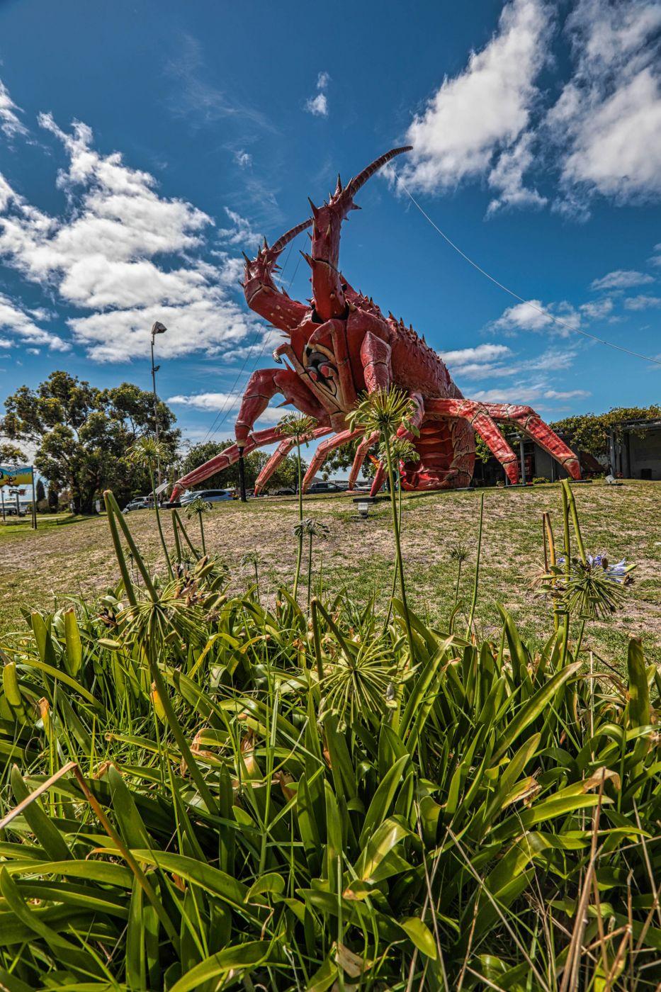 Giant Lobster Kingston SE, South Australia, Australia