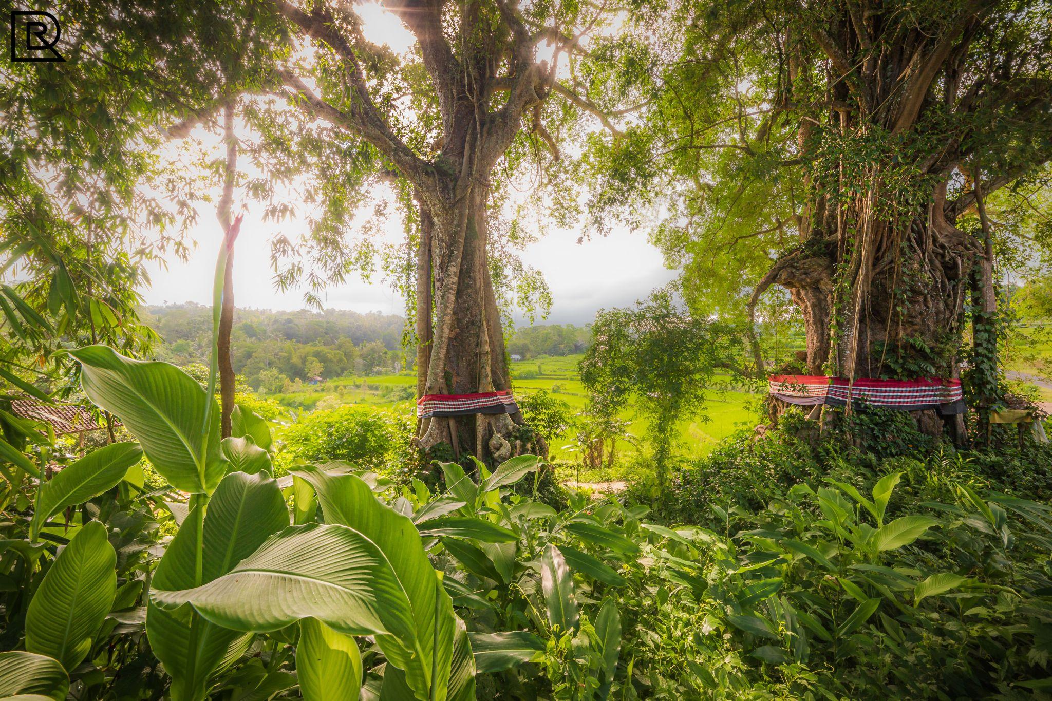 Magic view Tree, Indonesia