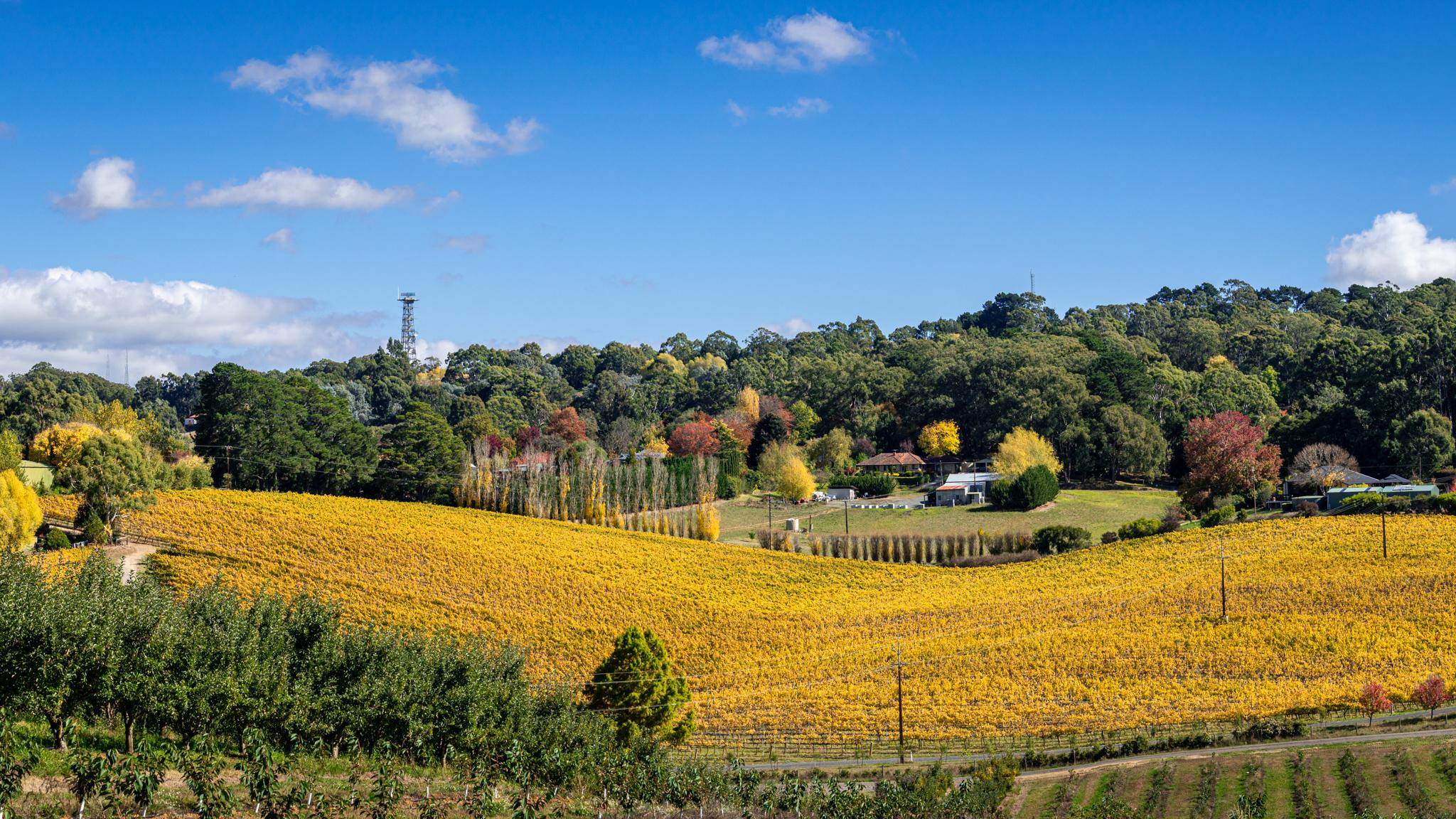 Ashton Hills Vineyard, Australia