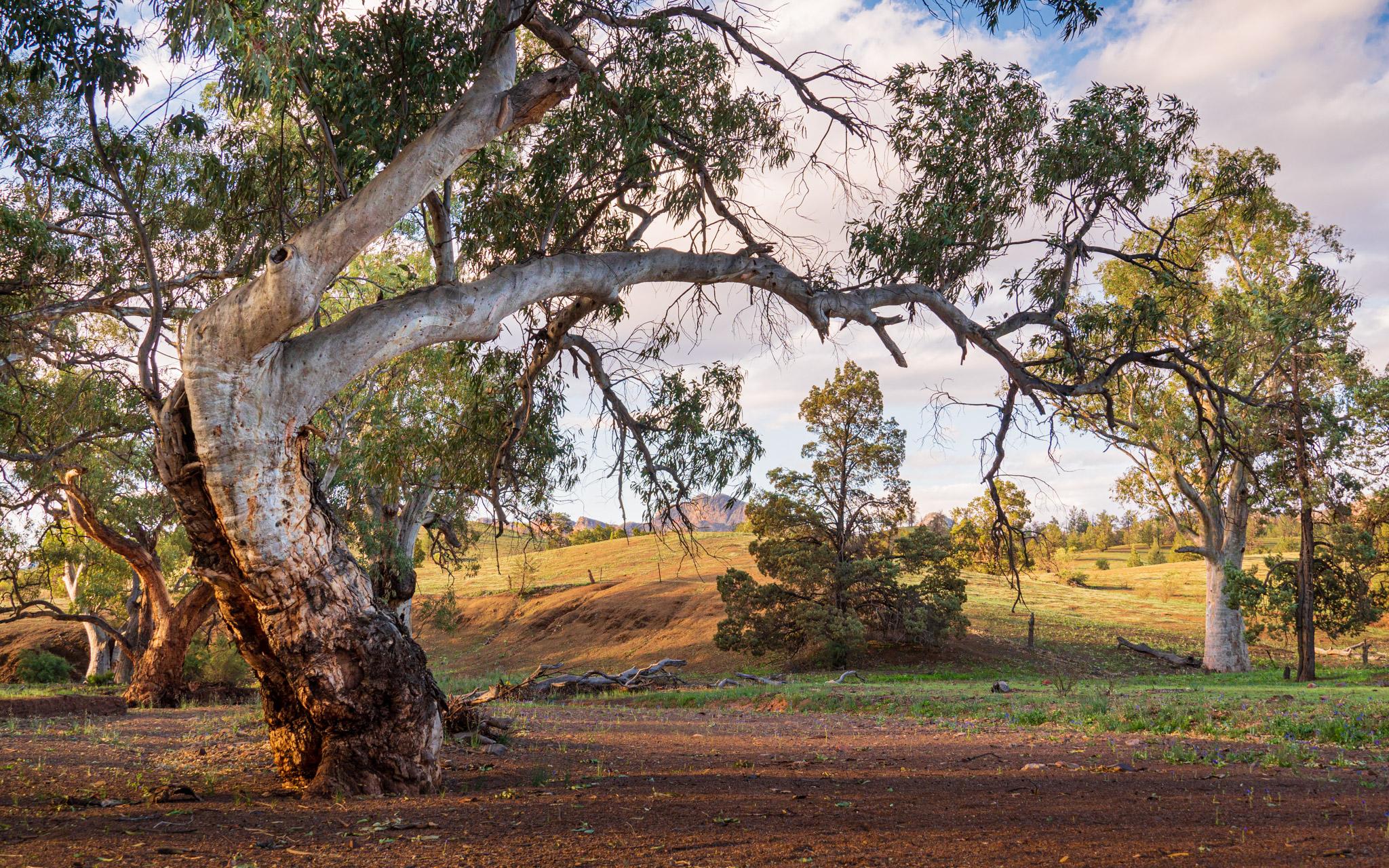 Brachina Creek, Australia