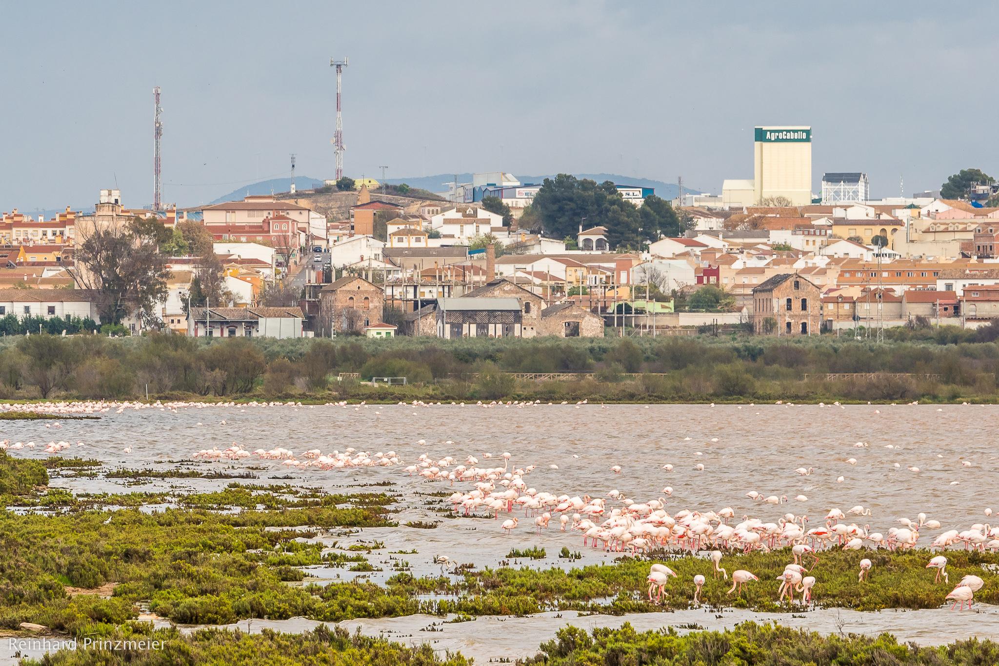 Laguna de la Fuente de Piedra, Spain
