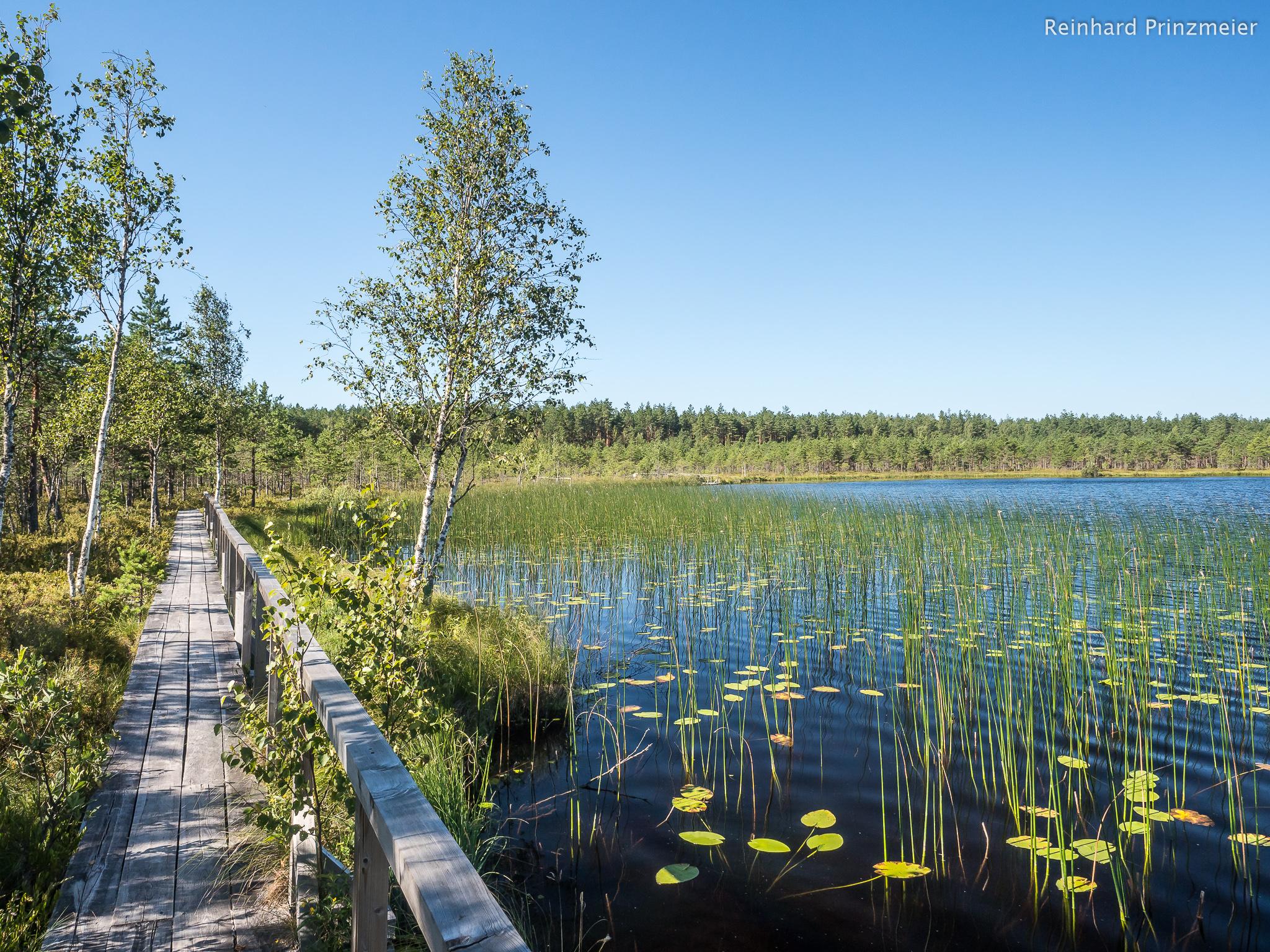 Teirumnīku Ezers Bog, Latvia