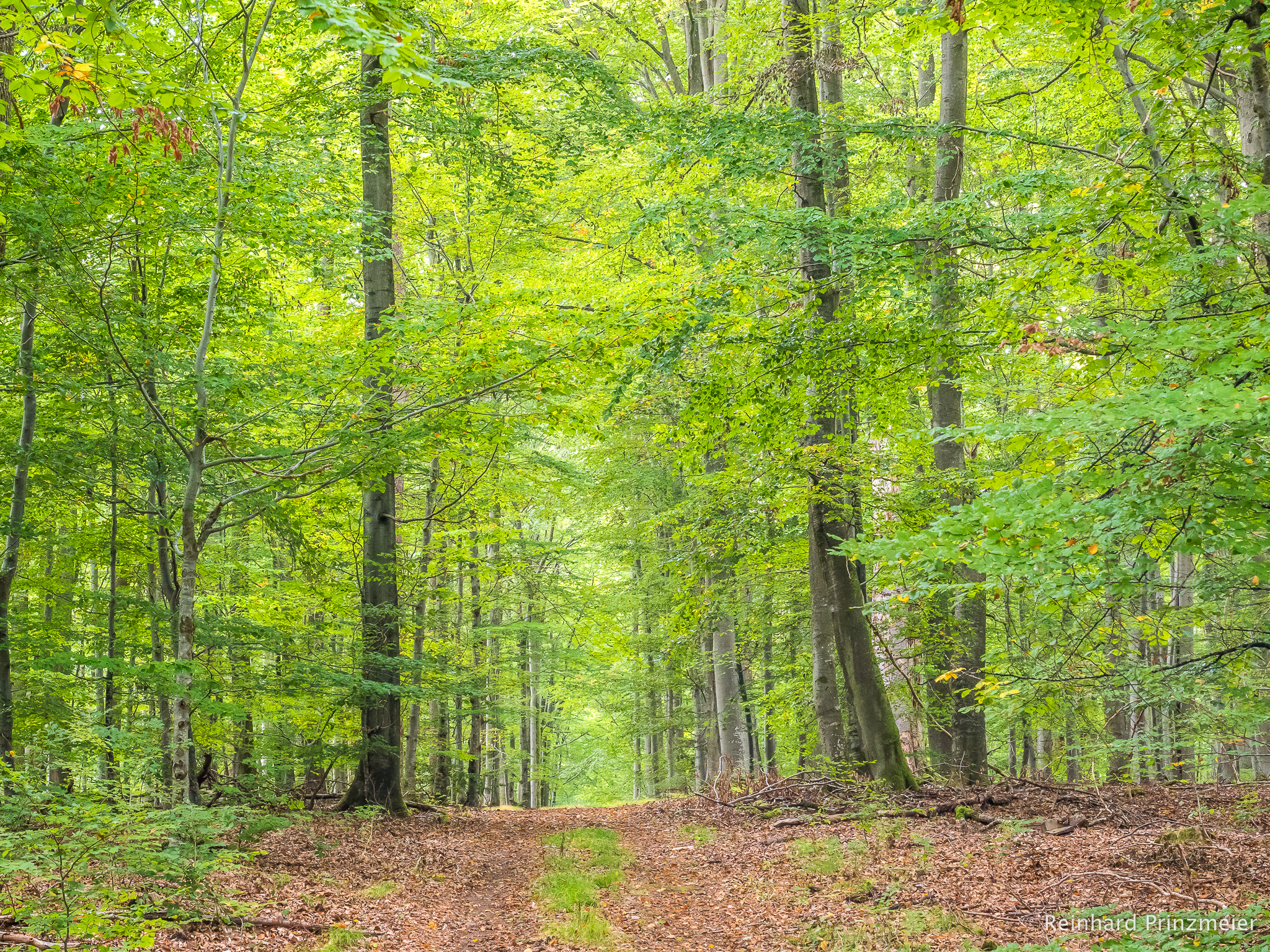 Weibersbrunn Natural Forest, Germany
