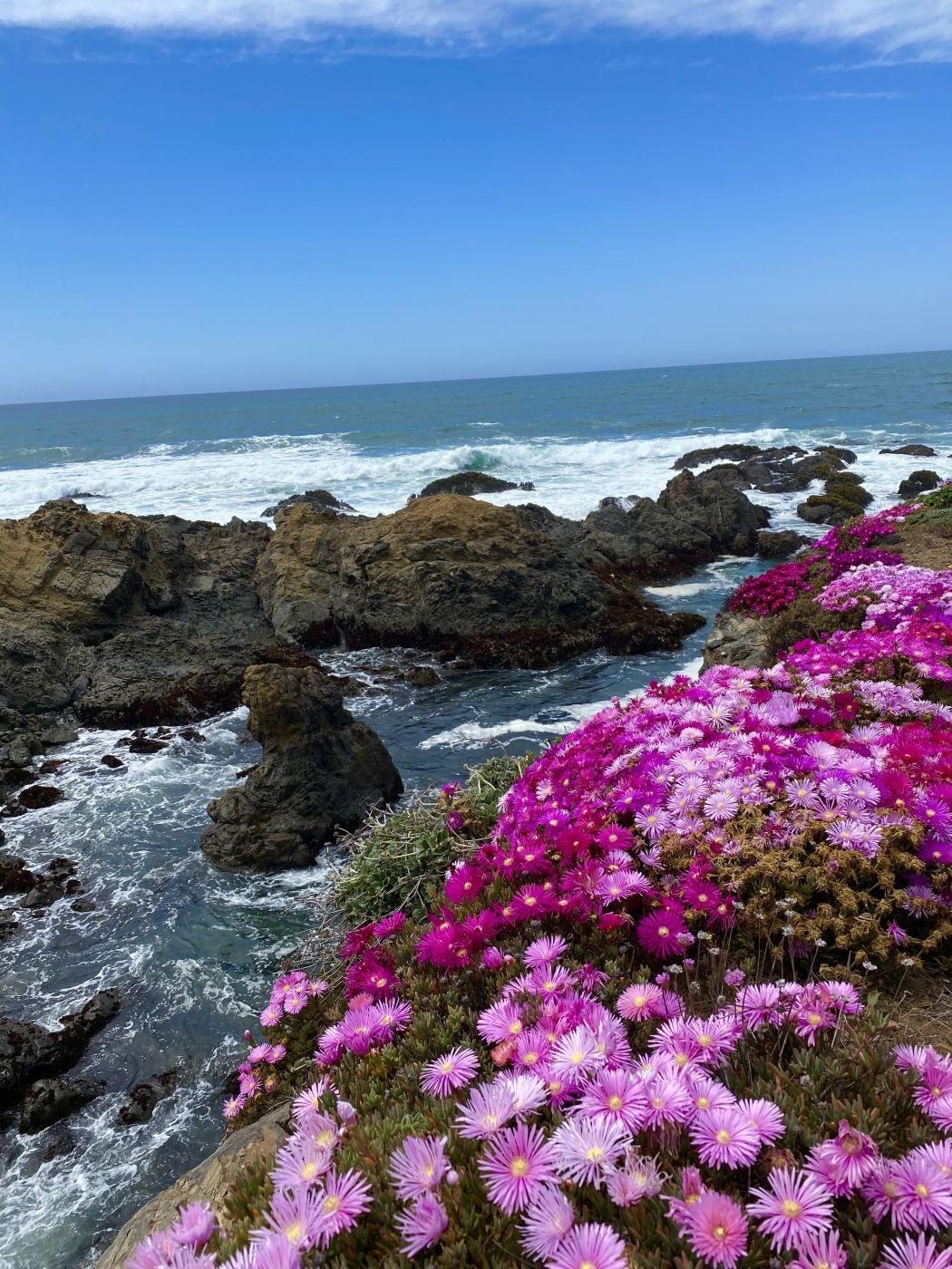 Coastal Flowers, USA