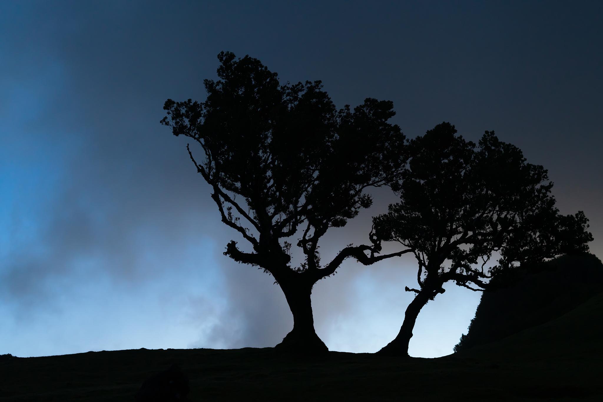 Posto Florestal Fanal, Portugal