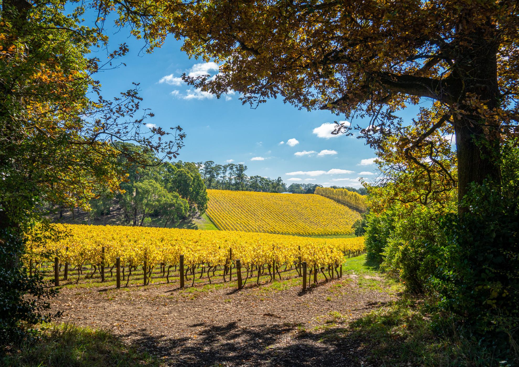 Summertown Vineyard, Australia