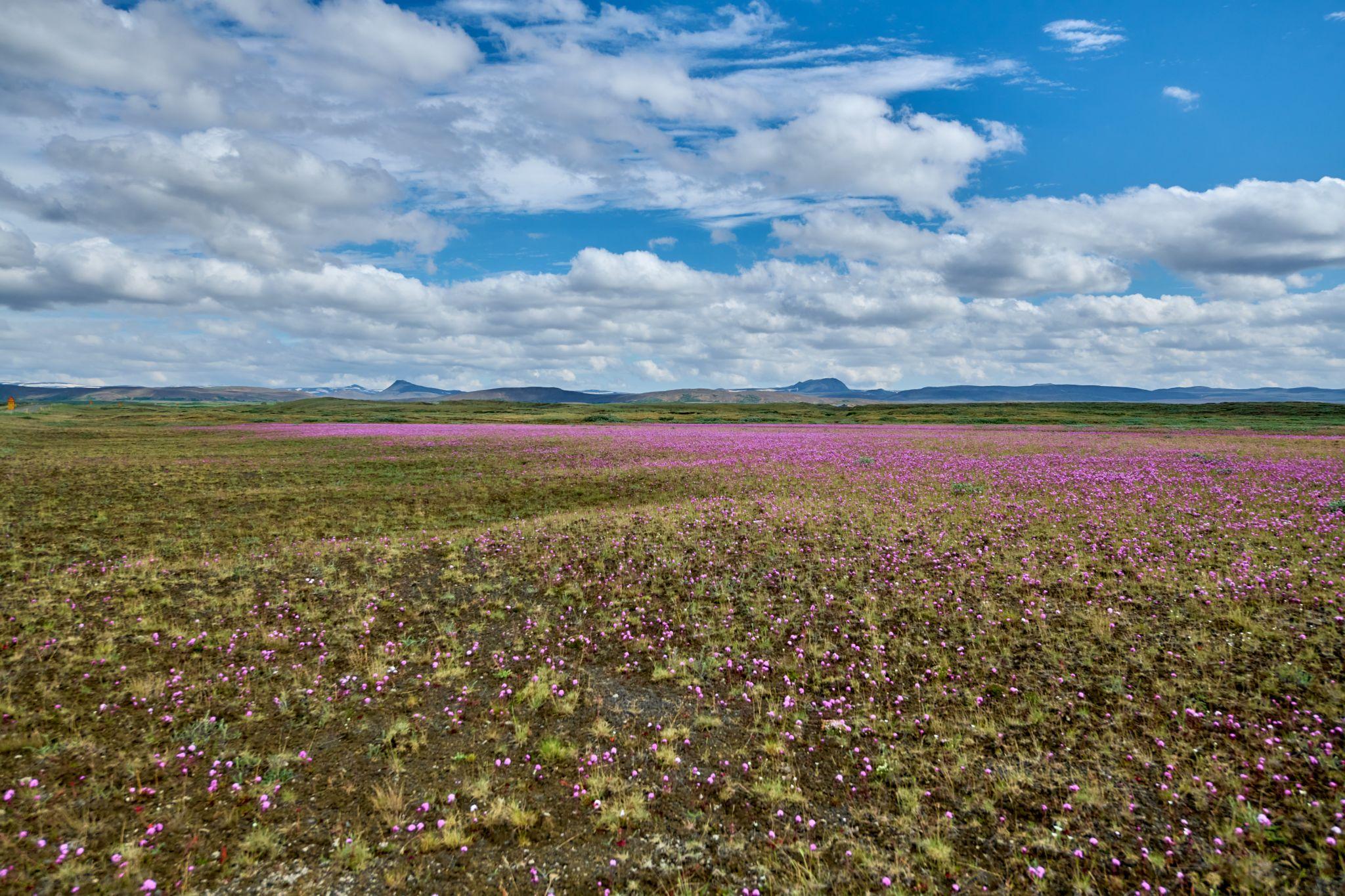 along 864 route, Iceland, Iceland