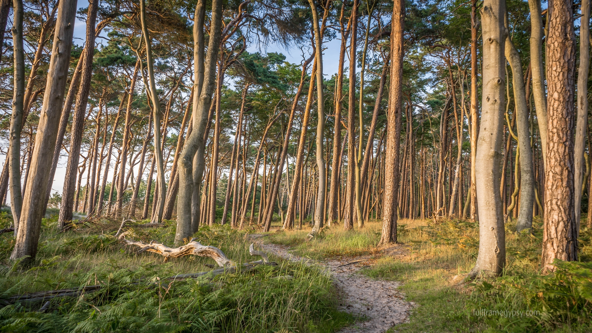 Mixed forest on the Westbeach, Germany