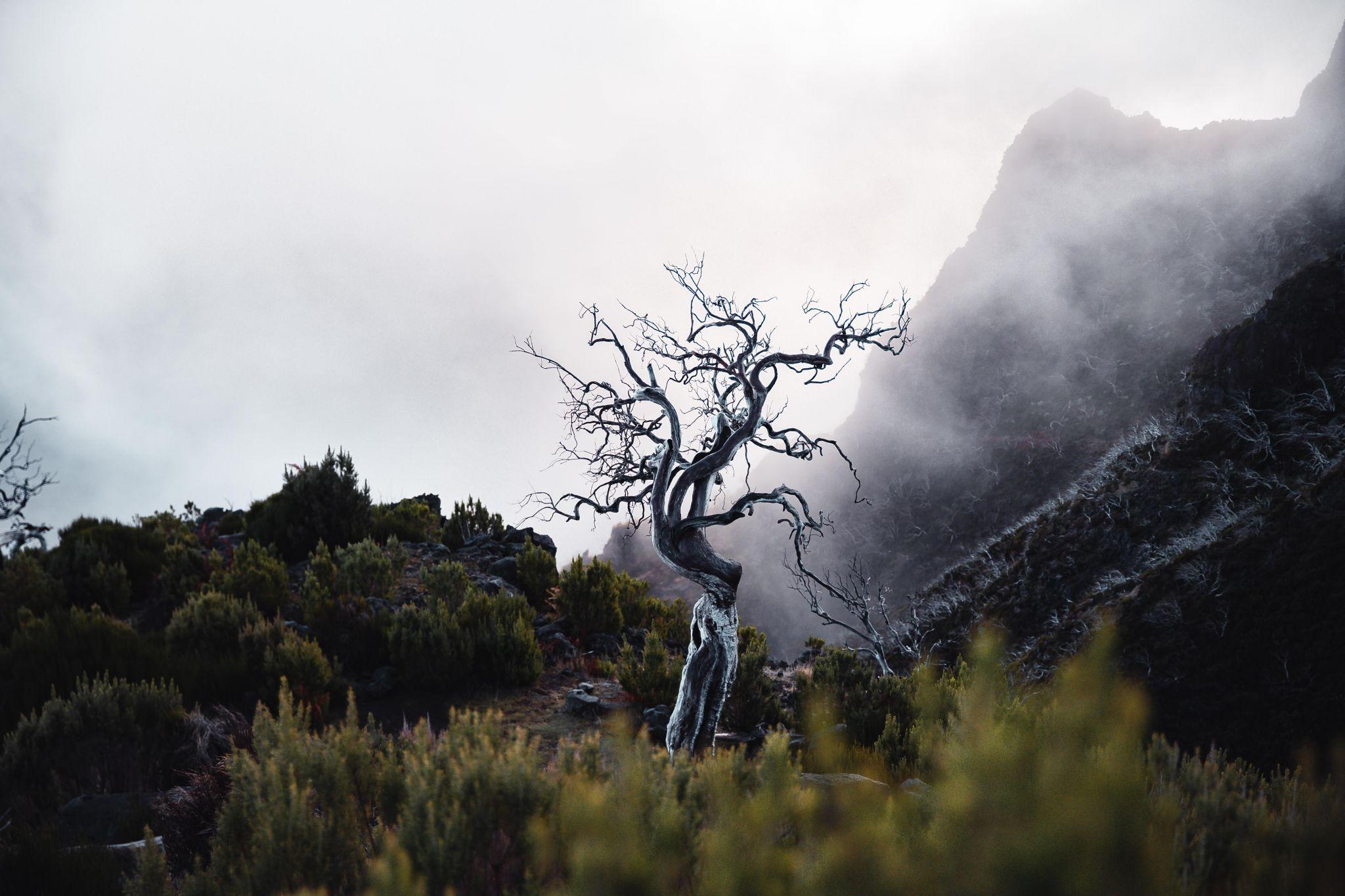 Death Tree, Portugal