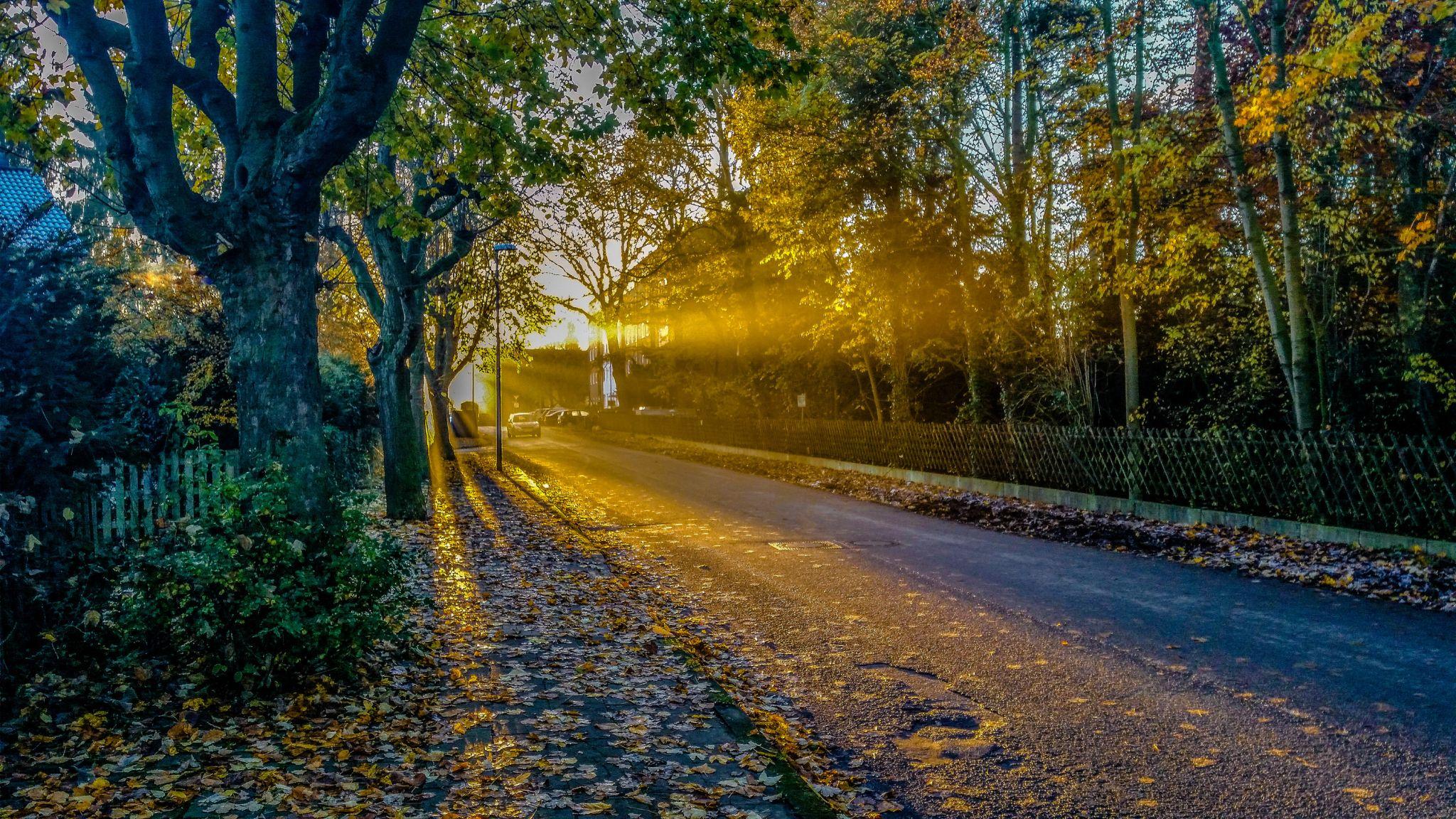 Good Morning Sun, Germany
